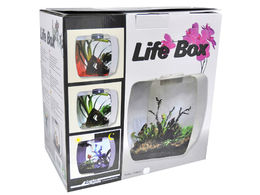 Lucky Reptile - Life Box 30 (purple)