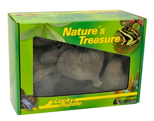 Lucky Reptile - Nature's Treasure Deco Box