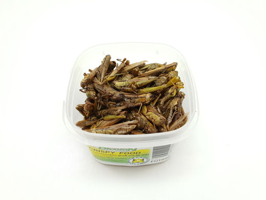 Dragon - Crispy Food Locusts 30g