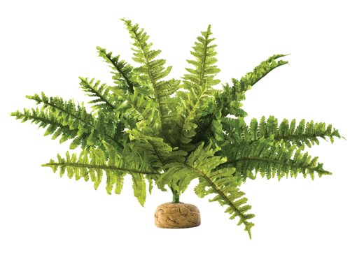 Exo Terra - Boston Fern M