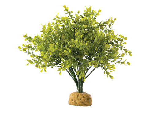 Exo Terra - Boxwood Bush