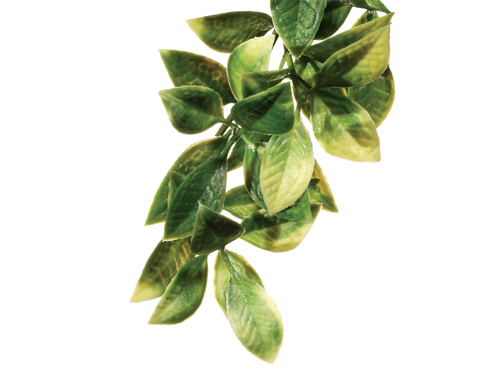 Exo Terra - Jungle Plant Mandarin L
