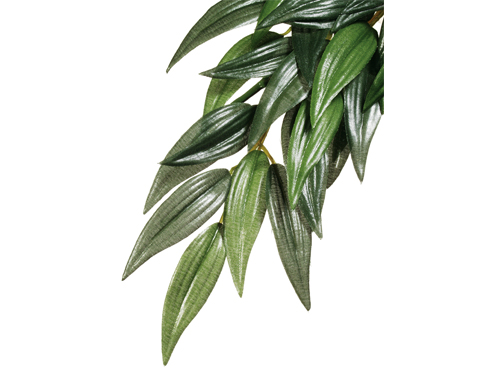 Exo Terra - Jungle Plant Ruscus M