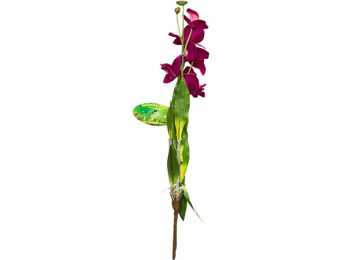 Lucky Reptile - Orchid With Stem 'lila'